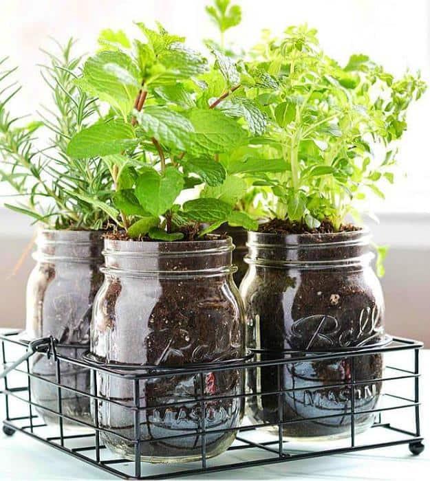 indoor-herb-garden-ideas-mason-jar-diy-herb-garden