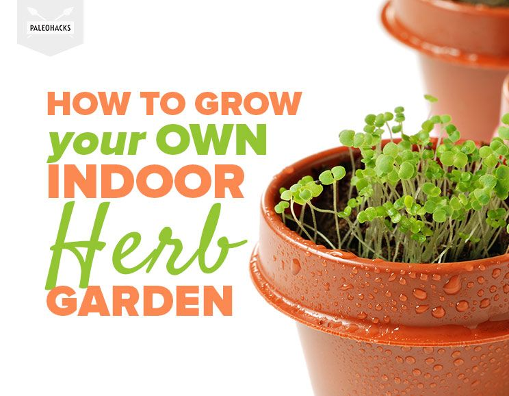 how-to-grow-your-own-indoor-herb-garden