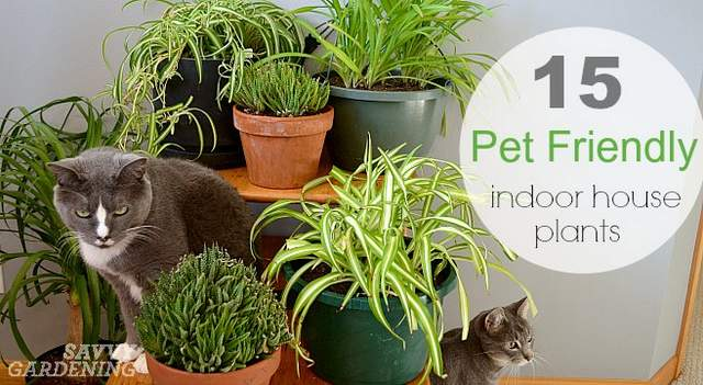 Pinterest picks weekly round up gather for Dog safe houseplants